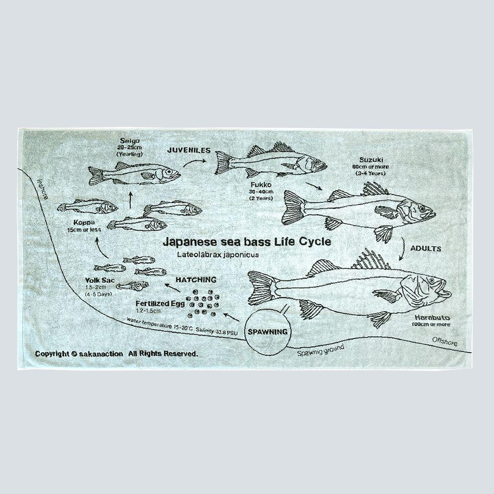 Japanese sea bass Life Cycle BIG TOWEL